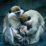 Ленинградский зоопарк познакомит посетителей с мамами животного мира в честь 8 марта